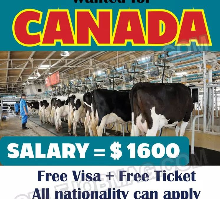 Dairy Farm Worker Demand in Canada